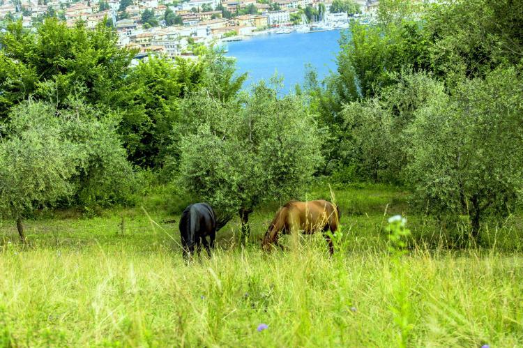 Holiday homeItaly - Lake District: Bilo Grande della Cascina  [22]