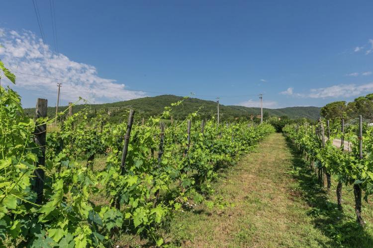 Holiday homeItaly - Tuscany/Elba: San Martino  [29]