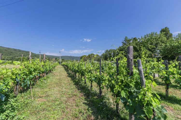 Holiday homeItaly - Tuscany/Elba: San Martino  [28]