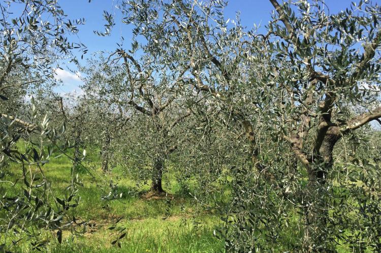 Holiday homeItaly - Tuscany/Elba: Lisa  [11]