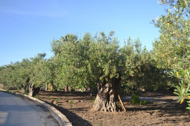 Holiday homeItaly - Sicily: Montalbano  [31]