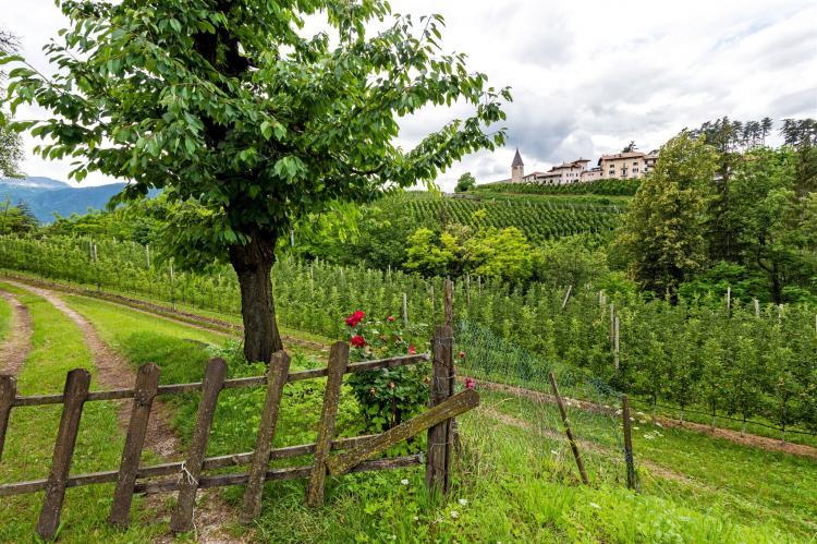 Holiday homeItaly - Trentino-Alto Adige: Golden Delicious  [25]