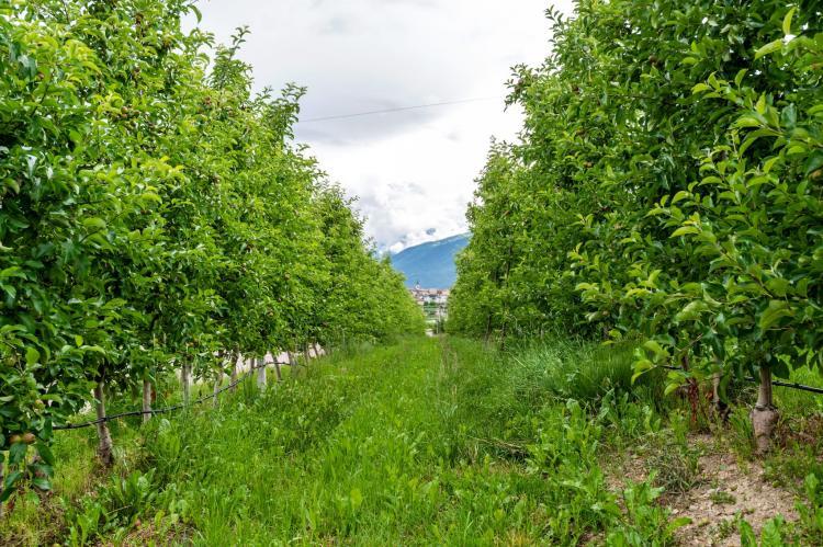 Holiday homeItaly - Trentino-Alto Adige: Golden Delicious  [36]
