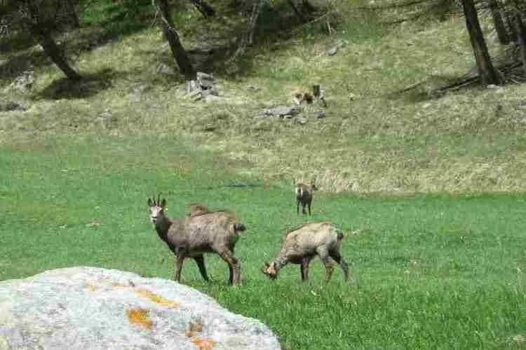 Holiday homeItaly - Valle d'Aosta: Chalet Antey Quadri C  [31]