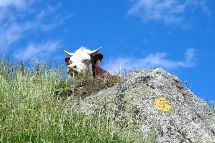 Holiday homeItaly - Valle d'Aosta: Chalet Antey Quadri C  [32]