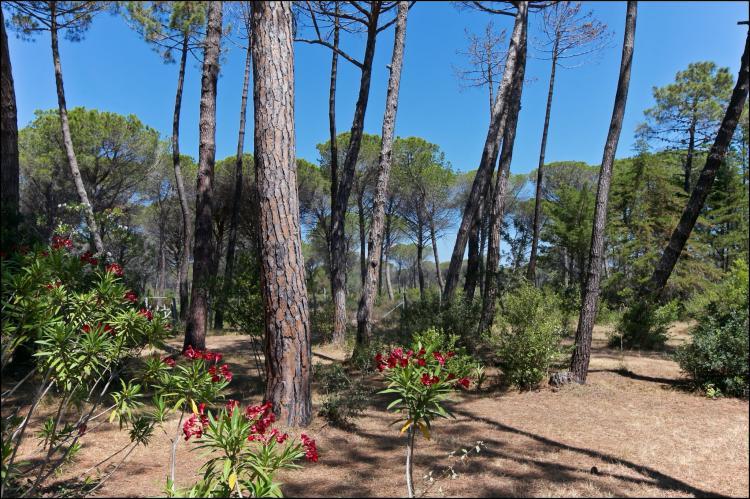Holiday homeItaly - Tuscany/Elba: Il Girasole  [5]