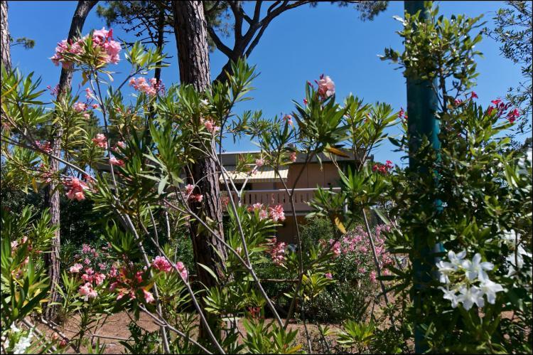 Holiday homeItaly - Tuscany/Elba: Il Girasole  [3]
