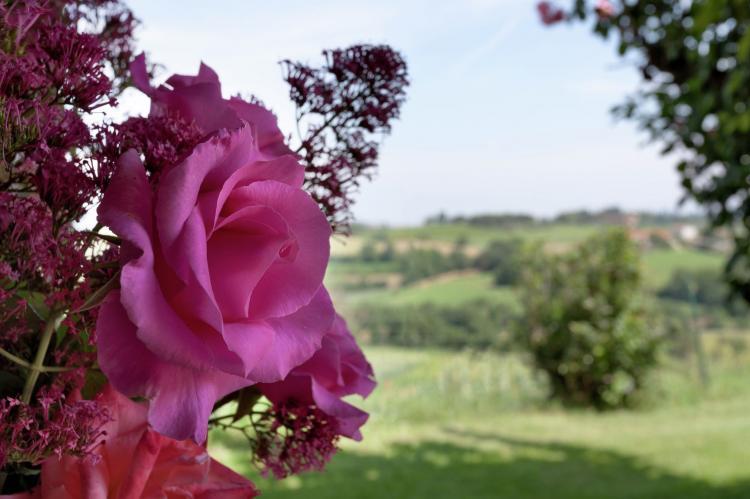 Holiday homeItaly - Tuscany/Elba: Castagno del Riccio  [17]