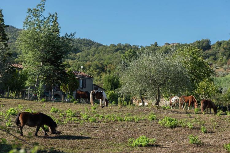 VakantiehuisItalië - Toscane/Elba: Podere Pisano bilo  [24]