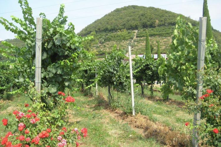 VakantiehuisItalië - Italiaanse Meren: Borgo Franciacorta 16  [33]