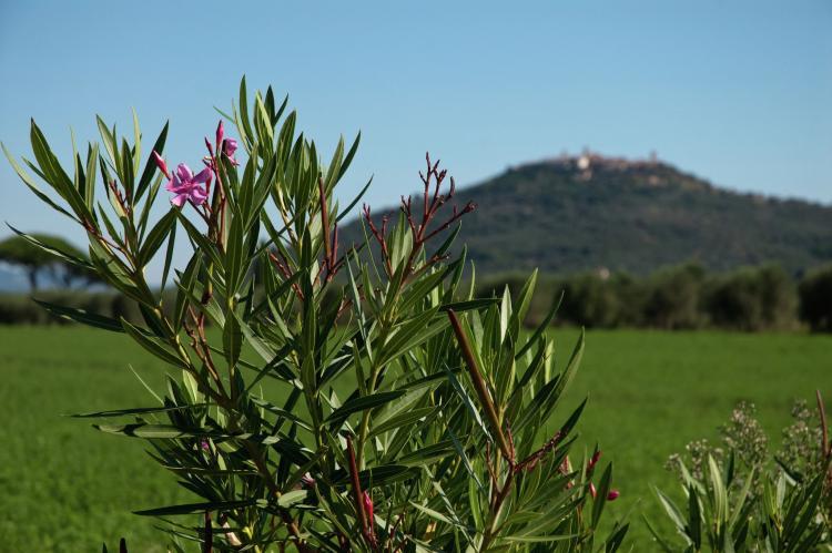 FerienhausItalien - Toskana/Elba: Bozzone Arancio  [21]