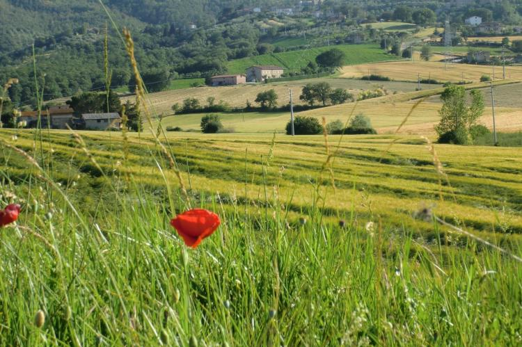 Holiday homeItaly - Umbria/Marche: Lavanda  [34]