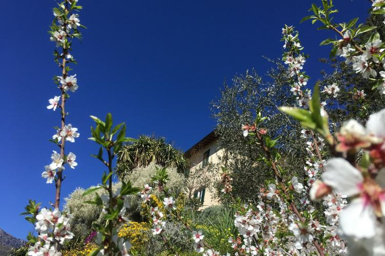 Holiday homeItaly - Liguria: Irene  [2]