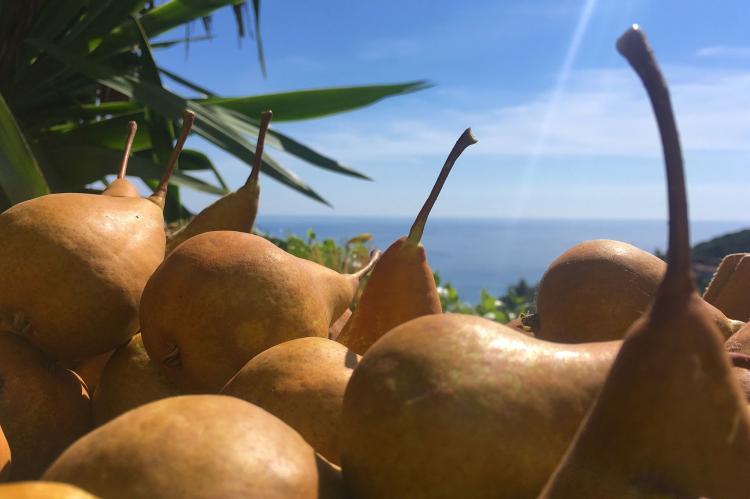 Holiday homeItaly - Liguria: Irene  [28]
