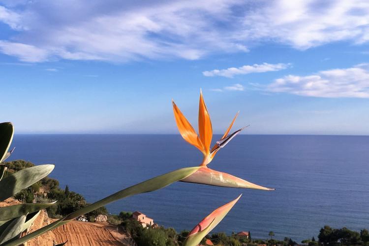 Holiday homeItaly - Liguria: Irene  [32]