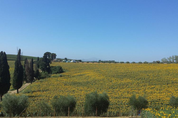 VakantiehuisItalië - Toscane/Elba: Sparsa Girasole  [10]