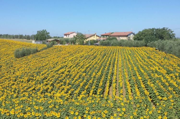 VakantiehuisItalië - Toscane/Elba: Sparsa Girasole  [21]