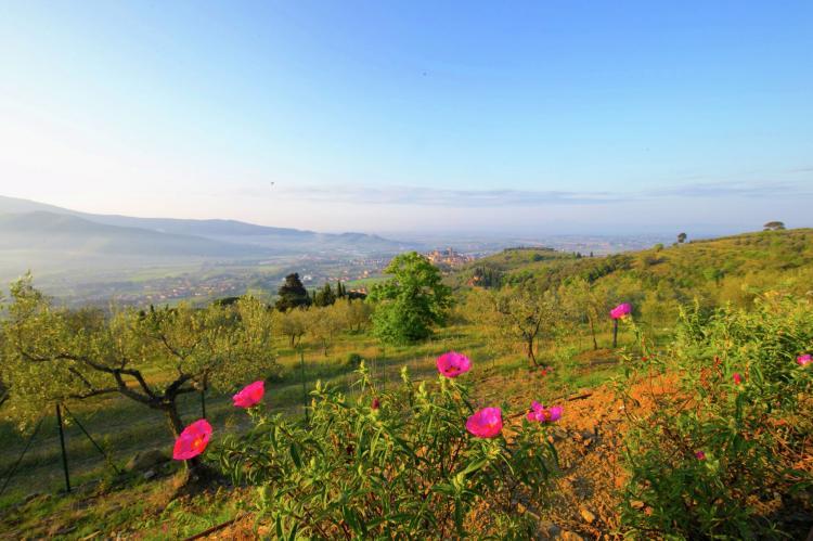Holiday homeItaly - Tuscany/Elba: Villa Magnifico  [38]