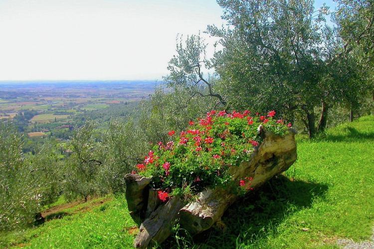 Holiday homeItaly - Tuscany/Elba: Cottage Sherryl  [4]