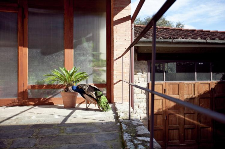 Holiday homeItaly - Tuscany/Elba: Lobelia  [27]