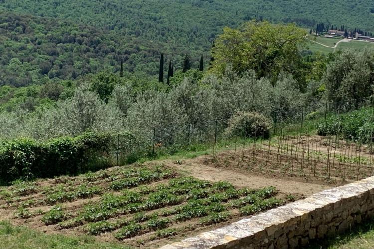 Holiday homeItaly - Tuscany/Elba: Ginestra  [31]