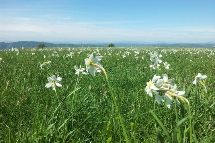 Holiday homeItaly - Umbria/Marche: Ripa del Sole  [30]
