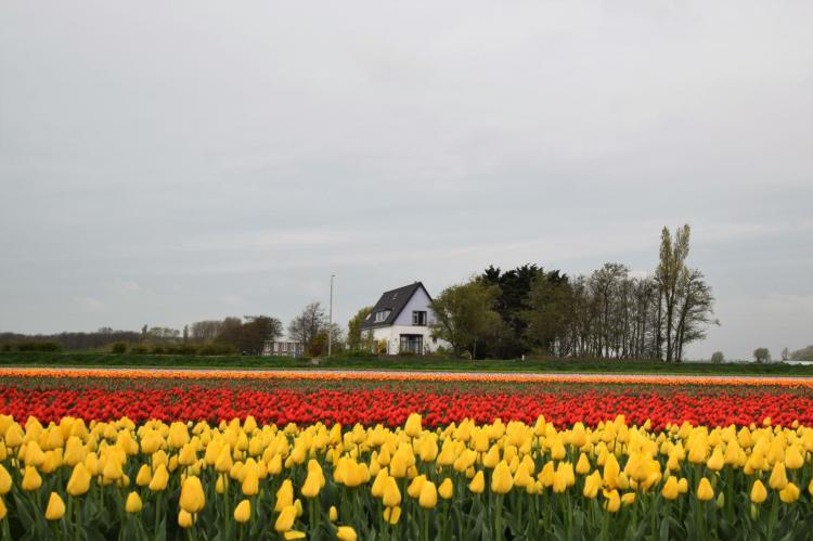 VakantiehuisNederland - Zuid-Holland: Morgenrood  [24]