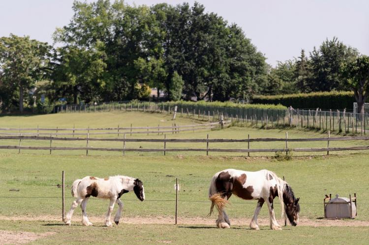 Holiday homeNetherlands - Limburg: Meschermolen 7  [27]