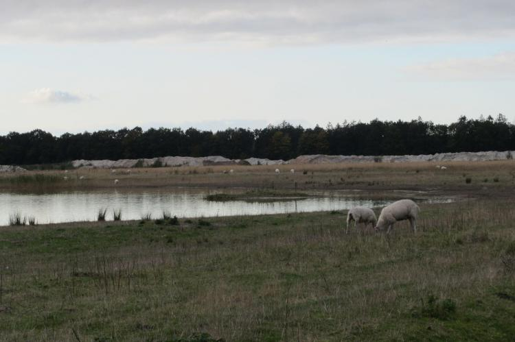 Holiday homeNetherlands - Flevoland: Vakantiepark Eigen Wijze 7  [21]