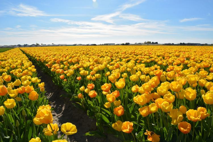 VakantiehuisNederland - Zuid-Holland: Clair de Lune  [31]