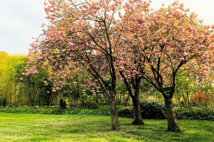 VakantiehuisNederland - Zuid-Holland: Clair de Lune  [3]