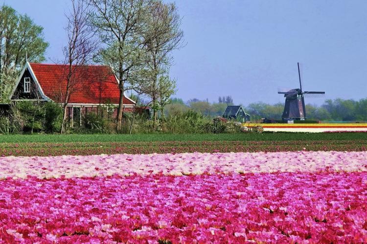 VakantiehuisNederland - Noord-Holland: Vossehoeck 4  [20]