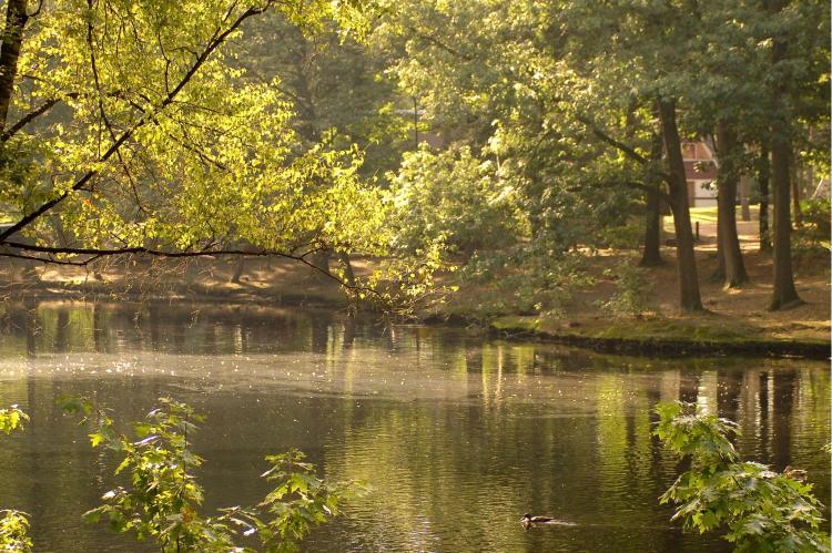 VakantiehuisNederland - Noord-Brabant: Bospark 't Wolfsven 5  [15]