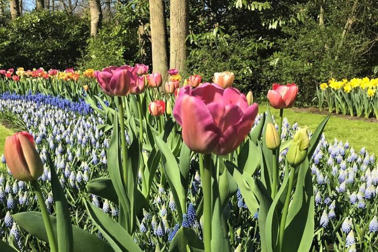 VakantiehuisNederland - Zuid-Holland: Scheveningen 70A  [18]