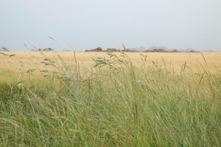 VakantiehuisNederland - Waddeneilanden: Kustpark Texel 10  [19]