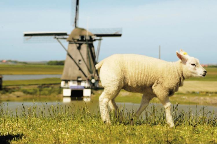 VakantiehuisNederland - Waddeneilanden: Kustpark Texel 10  [35]