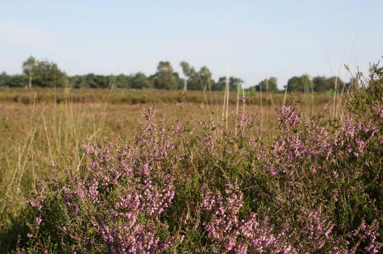 FerienhausNiederlande - Drenthe: Landgoed Het Grote Zand 1  [32]