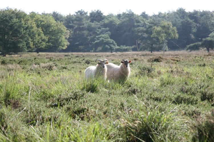 FerienhausNiederlande - Drenthe: Landgoed Het Grote Zand 1  [29]