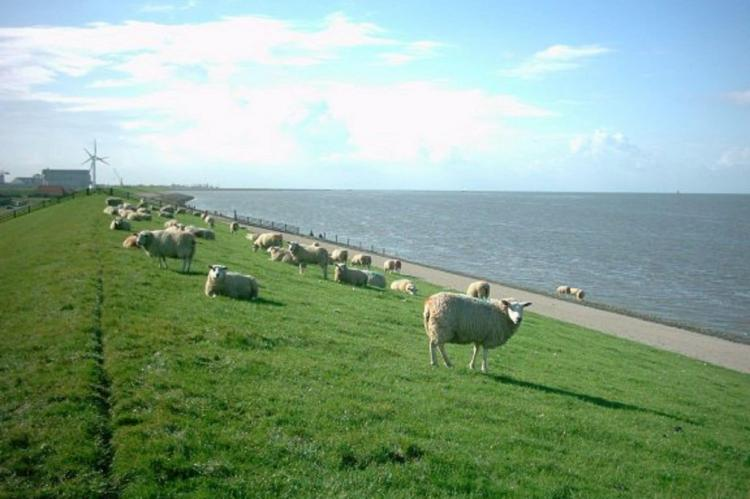 Holiday homeNetherlands - Friesland: Recreatiepark de Friese Wadden 16  [29]