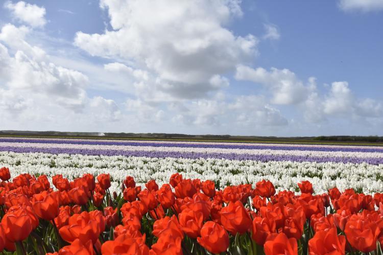 VakantiehuisNederland - Noord-Holland: Landelijk bij Zee  [25]
