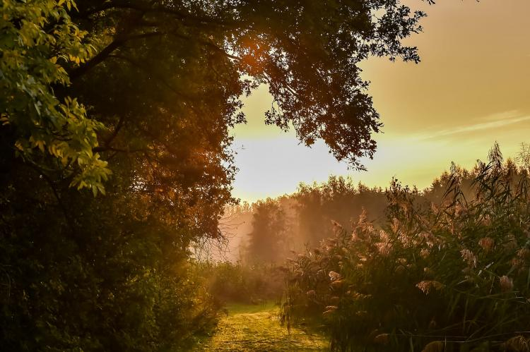 Holiday homeNetherlands - Overijssel: Vakantiepark Mölke 19  [35]