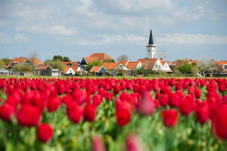 Holiday homeNetherlands - Frisian Islands: Het Wambuis  [14]