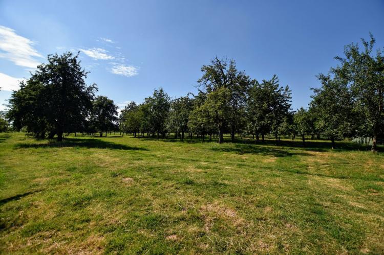VakantiehuisNederland - Gelderland: Boomgaard  [30]