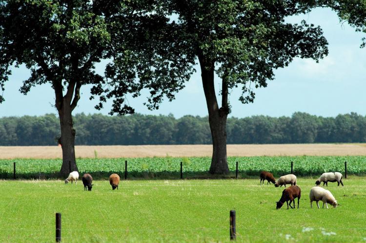 VakantiehuisNederland - Drenthe: Vakantiepark het Drentse Wold 4  [24]