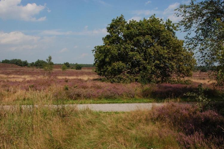 Holiday homeNetherlands - Gelderland: Landgoed De IJsvogel 9  [32]