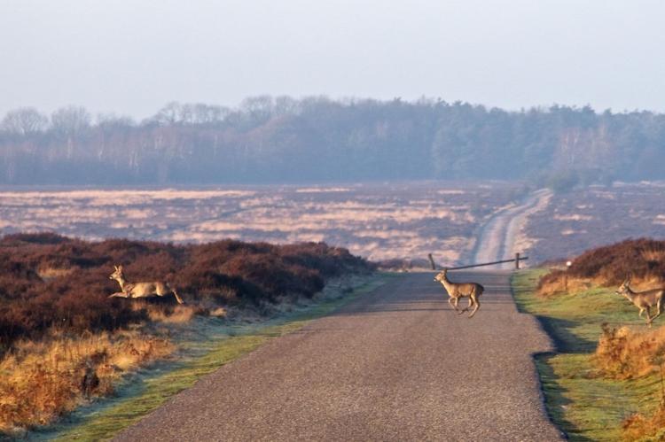 Holiday homeNetherlands - Gelderland: Landgoed De IJsvogel 9  [30]