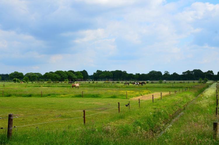 VakantiehuisNederland - Drenthe: De Botterviever  [16]