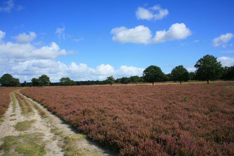 VakantiehuisNederland - Drenthe: Landgoed Het Grote Zand 14  [21]