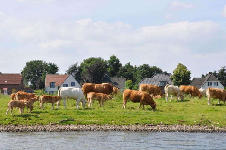 VakantiehuisNederland - Limburg: Van Meerwijck 7pax  [26]