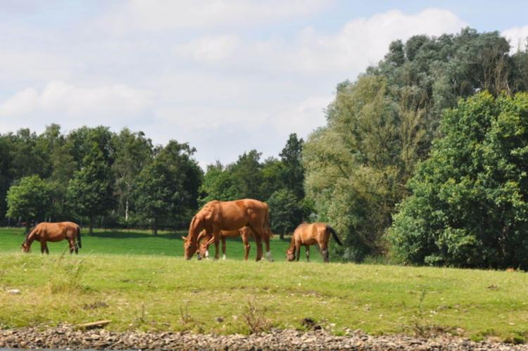 VakantiehuisNederland - Limburg: Van Meerwijck 7pax  [27]